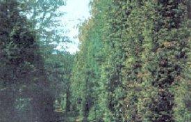 Gödöllői Arborétum Látnivalók Gödöllő, Gödöllői Arborétum Látnivalók Gödöllőn,