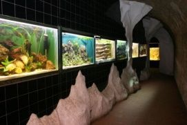 Pécsi Akvárium -Terrárium Vadaspark és állatkert, Pécsi Akvárium -Terrárium vadasparkok, állatkertek,