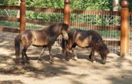 Nagyerdei Kultúrpark Látnivalók Debrecen, Nagyerdei Kultúrpark Látnivalók Debrecenben,