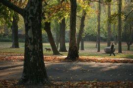 Városligeti fák