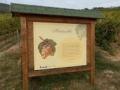 Szőlő tanösvény: Kiemelt Természeti érték látnivaló Tokajon