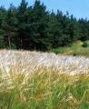 Bikácsi Ökör-hegy: Kiemelt Természeti érték látnivaló Bikácson