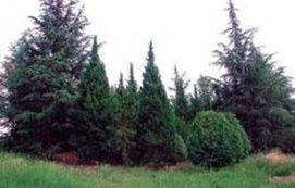 Arborétum_Balaton környéke Természeti érték , Arborétum Balaton...
