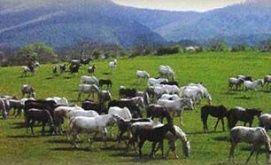 Lipicai ménes_Monok Különleges hely , Lipicai ménes  különleges...