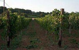 A borvidék jellemző borai_Dél-Dunántúl Borút és borvidék , A...