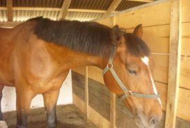 Bíbor Horse Lovasklub_Hajdú-Bihar megye Sport , Bíbor Horse Lovasklub...