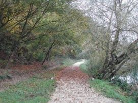 Desedai-parkerdő és arborétum_Dél-Dunántúl Természeti érték ,...