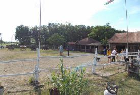 Patás Pajtás Lovasudvar_Hajdú-Bihar megye Sport , Patás Pajtás...