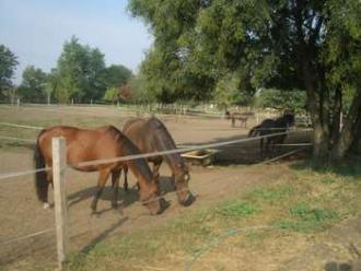 Óbester Park Szolgáltató Kft_Hajdú-Bihar megye Sport , Óbester Park...