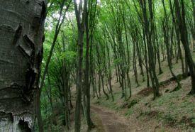 Vadászat az Aggteleki Nemzeti Parkban_Miskolc és környéke Túra...