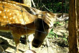 Somoskői Wildlife Park_Safari park, zoo , Somoskői Wildlife Park ,  ,