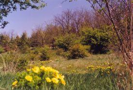 Dolina-völgy_Budaörs és környéke Természeti érték , Dolina-völgy...