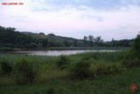 Garancs tó_Budaörs és környéke Természeti érték , Garancs tó...