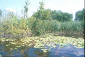 Vajai-tó Természetvédelmi Terület_Szabolcs-Szatmár-Bereg megye...