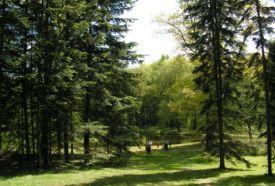 Budafai Arborétum_Zala megye Természeti érték , Budafai Arborétum...