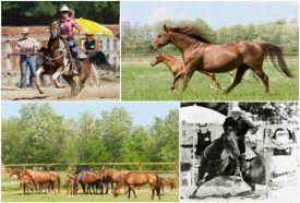 TB Ranch_Hajdú-Bihar megye Sport , TB Ranch hajdú-bihari sportközpont,...