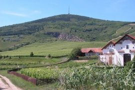 Tokaji történelmi borvidék kulturtáj (2002)_ , Tokaji történelmi...
